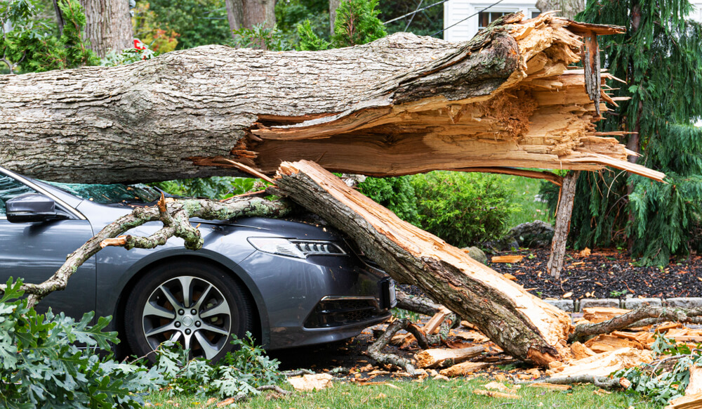 fallen tree on a car what to do after a tornado