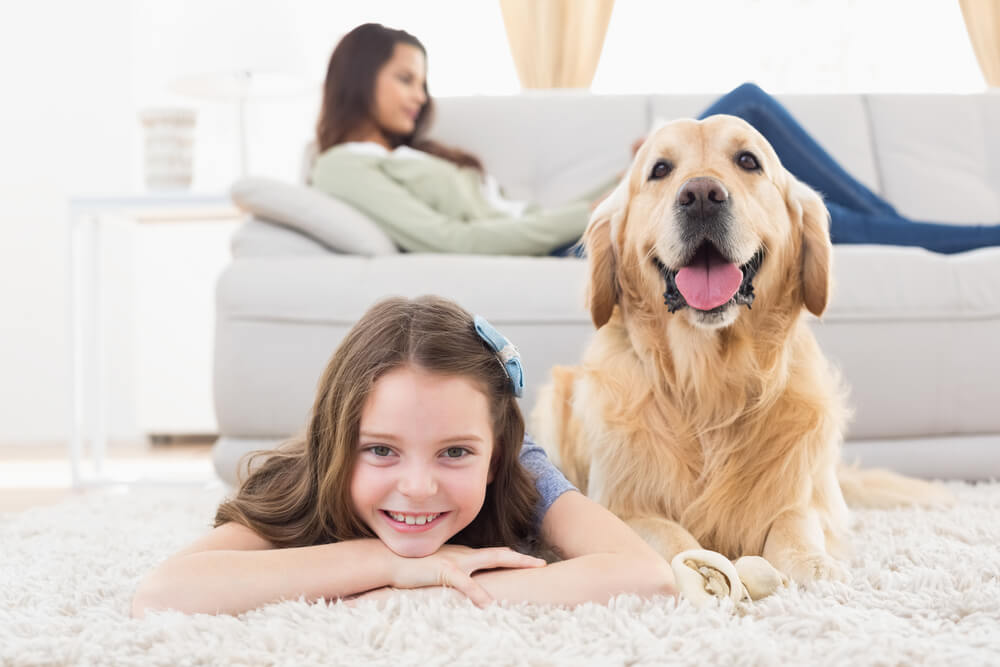 home insurance for dog owners